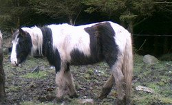 Skibbereen-Animal-Sanctuary-and-Rescue-Centre (329)