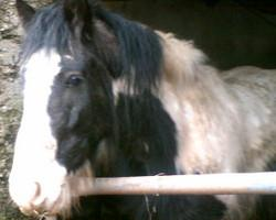Skibbereen-Animal-Sanctuary-and-Rescue-Centre (336)