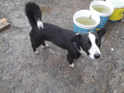 Skibbereen-Animal-Sanctuary-and-Rescue-Centre (351)