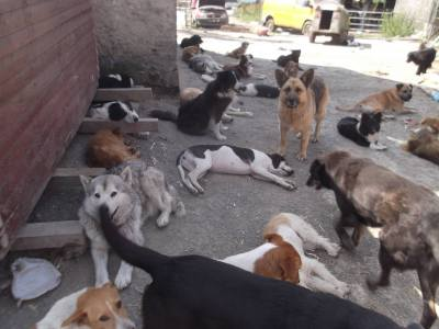 Skibbereen-Animal-Sanctuary-and-Rescue-Centre (366)