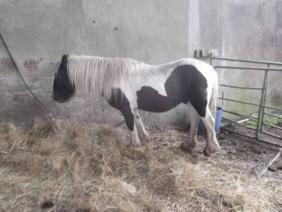 Skibbereen-Animal-Sanctuary-and-Rescue-Centre (380)