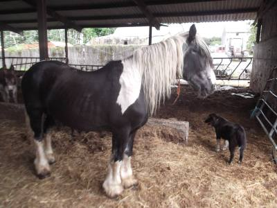 Skibbereen-Animal-Sanctuary-and-Rescue-Centre (382)
