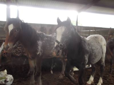 Skibbereen-Animal-Sanctuary-and-Rescue-Centre (395)