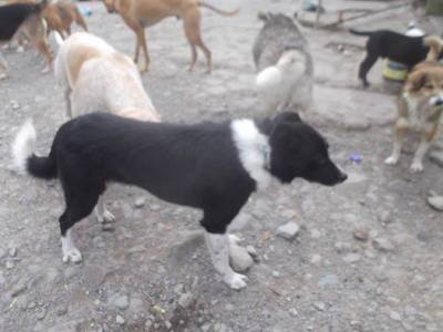 Skibbereen-Animal-Sanctuary-and-Rescue-Centre (412)