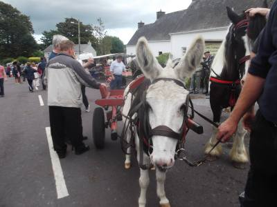 Skibbereen-Animal-Sanctuary-and-Rescue-Centre (43)