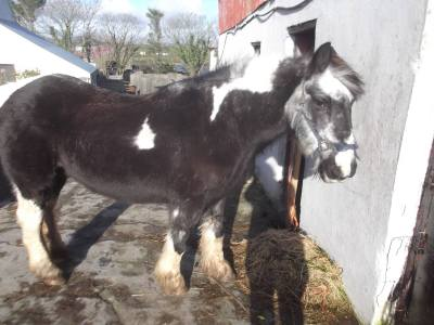 Skibbereen-Animal-Sanctuary-and-Rescue-Centre (46)