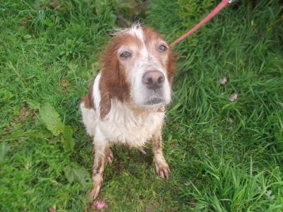 Skibbereen-Animal-Sanctuary-and-Rescue-Centre (5)