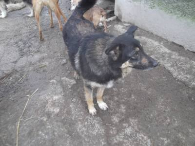 Skibbereen-Animal-Sanctuary-and-Rescue-Centre (72)