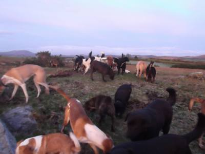 Skibbereen-Animal-Sanctuary-and-Rescue-Centre (91)