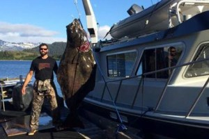 405-Pound Halibut Caught in Alaska