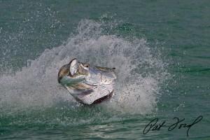 Tarpon Fishing with Pat Ford