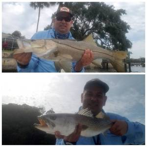 Nice indian river 32″ snook and 24″ seatrout.