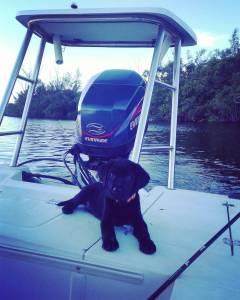 Basher Boat Dog!!