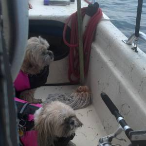 Sassy and Ellie Mae, the girls fishing     …
