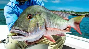 Had a great   fishing with  . Was able to bring in this slob of a               …