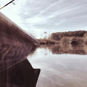 Cruising the marsh.      …