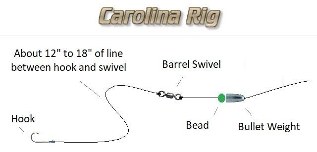 carolina rig