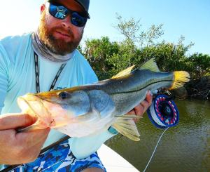 Making friends with some local snook
