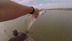 These fish are acting insane!                             …