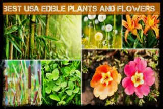 edible plants in USA