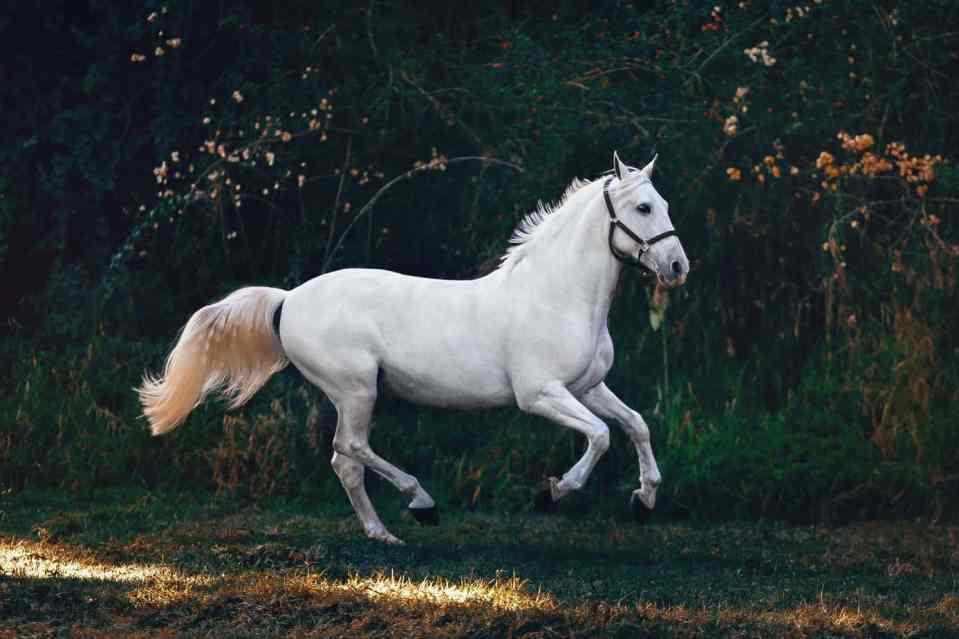 Paard, paardenmelk, merriemelk, voordelen huidaandoeningen, eczeem, psoriasis, acne