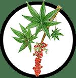 castor-seed-oil_150px-min