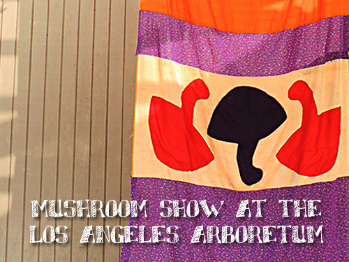 Wild Mushroom Show at the LA County Arboretum
