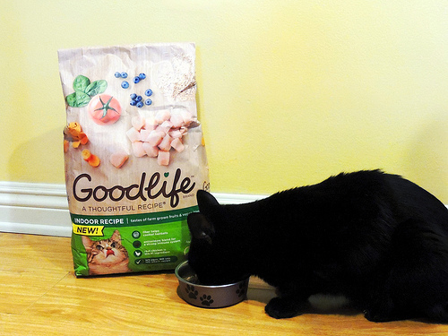 Skinned Knees GOODLIFE Dry Cat Food for Picky Eaters
