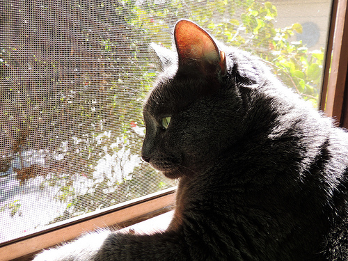 My Cat Has Cancer - How I Learned to Cope with a Sick Pet