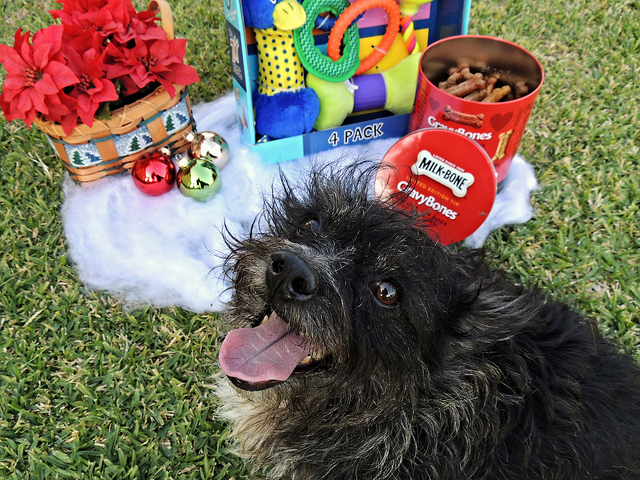 Holiday Pet Gift Ideas