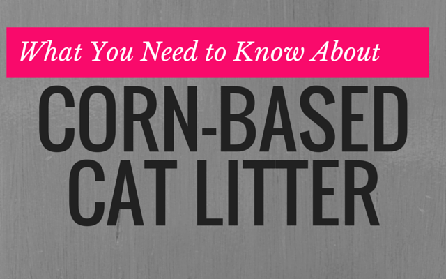 Skinned Knees What You Need to Know About Corn Based Cat Litter
