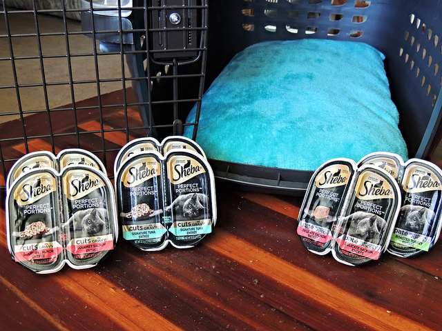 DIY Cat Carrier Pillow Tutorial