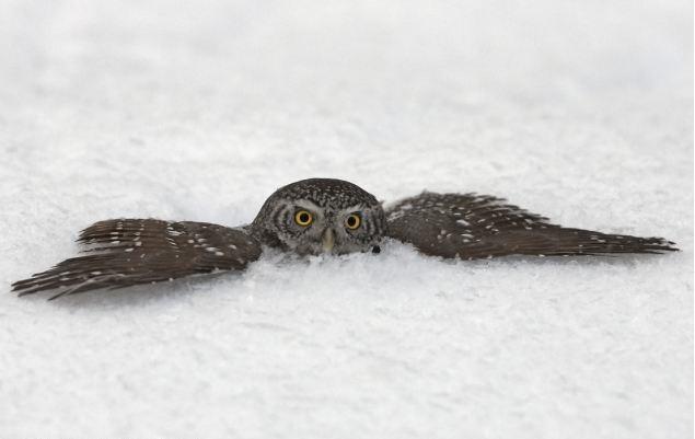 owl - skiology - blog