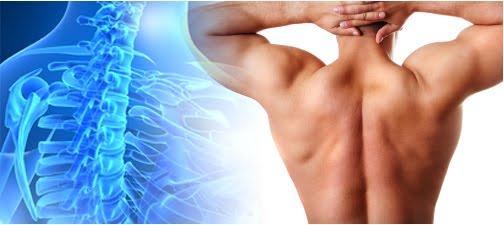 human back bone 2