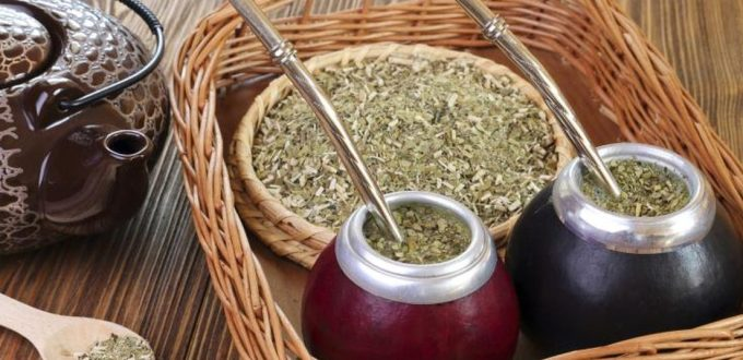cup of Yerba Mate Tea plant