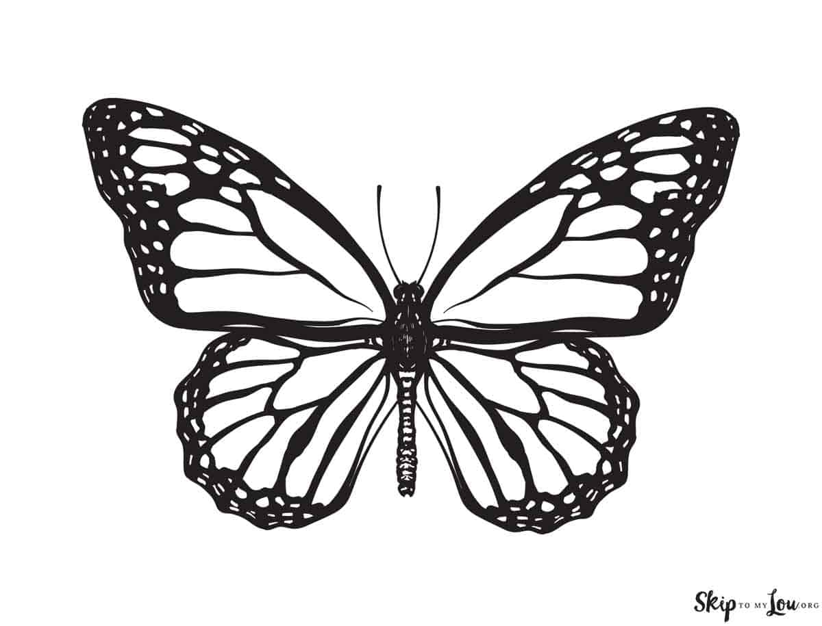 Beautiful Butterfly Coloring Pages