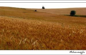 Matvareprisar  og  matvareproduksjon