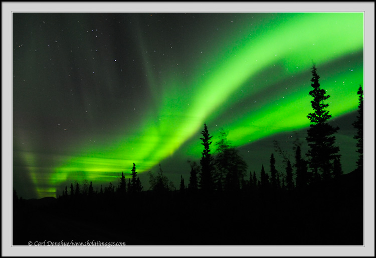 Northern Lights Forest