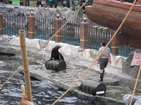 Show com Golfinhos no West Edmonton Mall