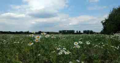 Feld bei Lindenberg