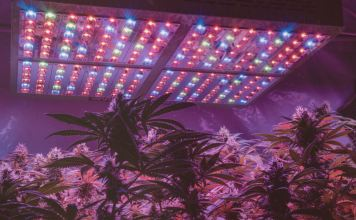 Best Lights For Growing Weed at Every Stage