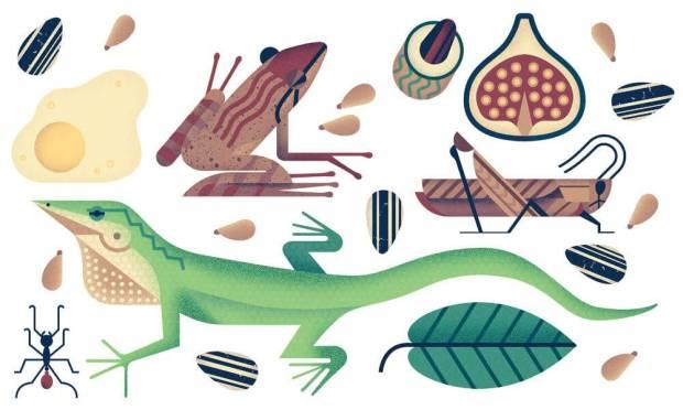Mad-About-Monkeys-Owen-Davey-Illustration-Diet-Food_1000