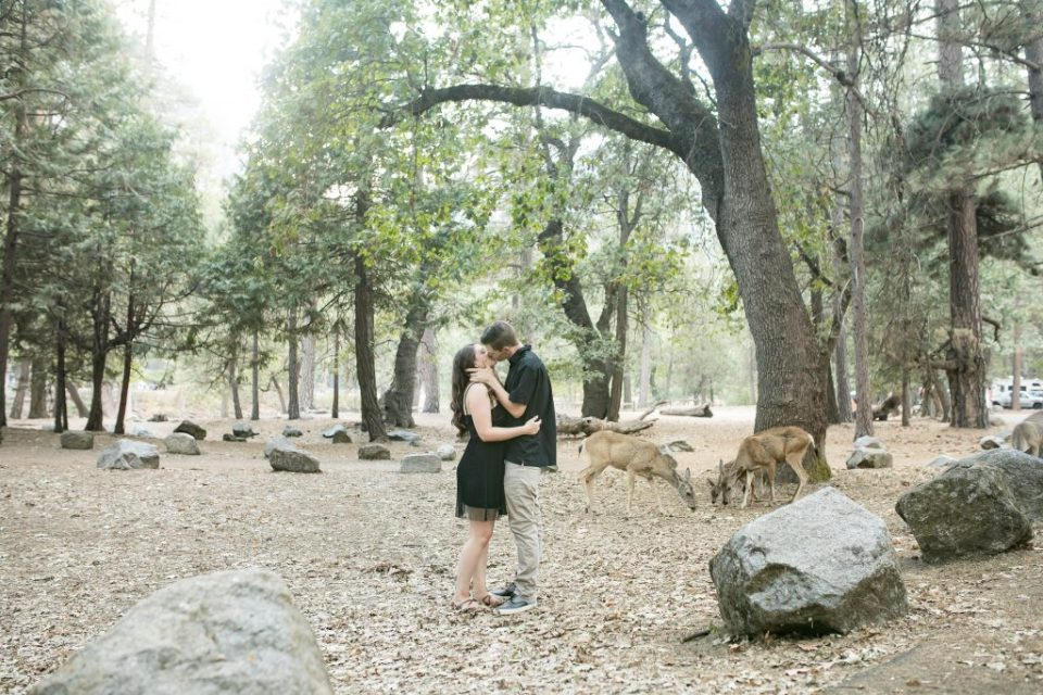 couple kiss with deer in Yosemite