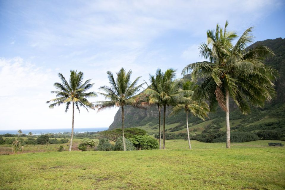the view at Jumanji Kualoa new popular wedding venue