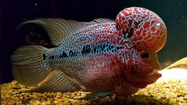 Brain Fish at Ocean World