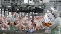 غسيل الدجاج يؤدي إلى انتشار البكتيريا الضارة