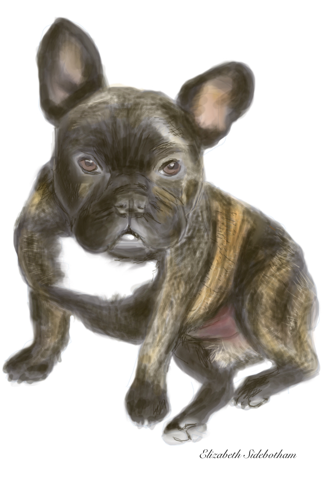FrenchBulldog7