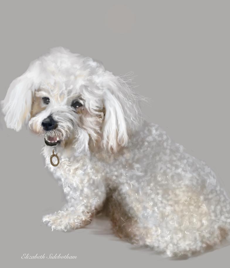 whitedog16tif