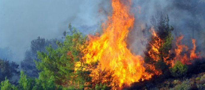 Κατασβέστηκε η φωτιά στο δάσος ανάμεσα σε Πεταλούδες και Άγ. Σουλά