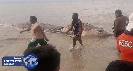 بالصور.. وحش بحري يرعب سكان جزيرة بالفلبين